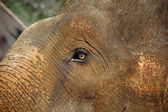 The Eye of the Baby Elephant — Stock Photo