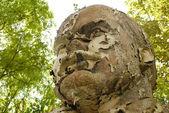 Gasto e escamoso busto de lenin — Foto Stock