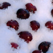 Frozen Cherries in Snow - Stock Photo