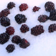 Blackberries in Snow - Stock Photo