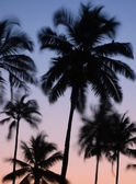 Silhouettes of Vibrating Palm Trees — Stock Photo