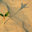 Lone Plant in the Desert — Stock Photo