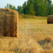 Haymaking in August — Stock Photo
