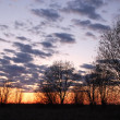 Bare Trees at Sunset — Stock Photo