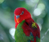 A bright parrot — Stock Photo