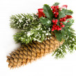 Christmas pine — Stock Photo