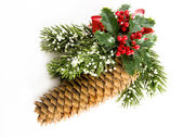 Christmas pine — Stock Photo