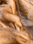Mink fur — Foto de Stock