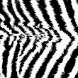 Zebra pattern — Stock Photo #1720120