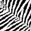 Zebra pattern — Stock Photo #1757568