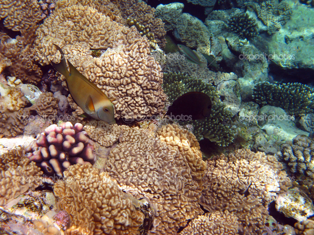 Coral reef fish yellow - photo#24
