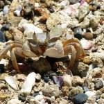 Crab on a beach — Stock Photo