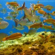 Tropical fishes and coral reef — Stock Photo #1248936