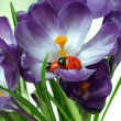 While does not see, ladybug takes care of its posterity — Stock Photo