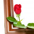 Royalty-Free Stock Photo: Rose on the frame