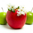 Red & green apple — Stock Photo