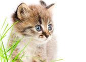 Beautiful kitty — Stock Photo