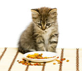 Small kitten eating dry cat food. — Stock Photo