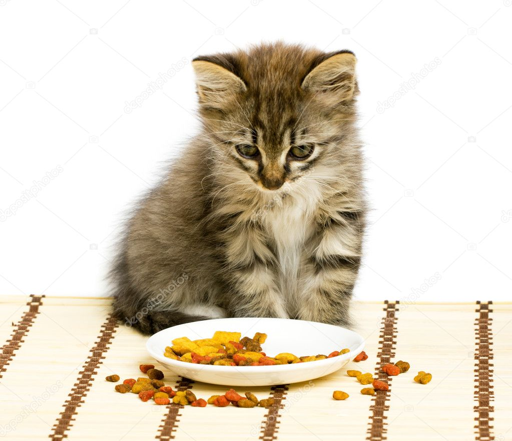 Cat Not Eating Dry Food