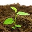 Stock Photo: New born plant