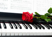 Romantic concept - red rose on piano key — Stock Photo