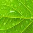 Stock Photo: The green leafs with drops