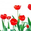 Royalty-Free Stock Photo: Tulips Frame Floral Template