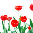 Tulips Frame Floral Template — Stock Photo #1032481