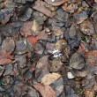Dark Fallen Leaves — Stock Photo #1118081