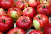 Apples in Rows — Stock Photo