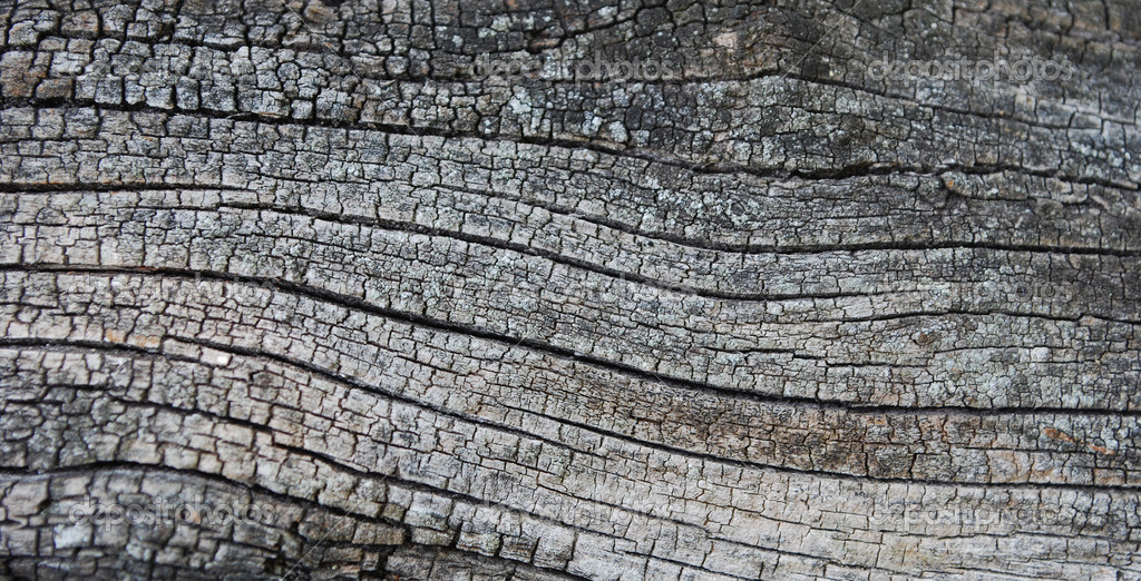 Old Dry Cracked Tree Texture — Stock Photo #1233349