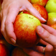 Apple From Hand to Hand - Stock Photo