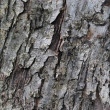 Tree Bark Texture — Stock Photo #1264605