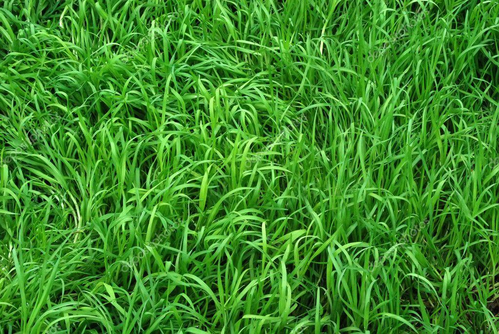 Green Grass Background Images Sunlit Green Grass Meadow