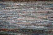 Old Tree Texture — Stock Photo