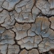 Cracked earth - Stock Photo