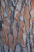 Bark of an old tree — Stock Photo