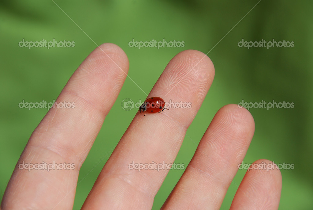 Ladybug ( coccinella ) on a hand close-up — Stock Photo #1029287