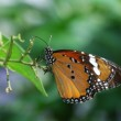 Butterfly — Stock Photo #1044434