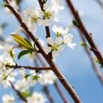 Spring mood — Stock Photo