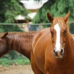 Horses — Stock Photo #1071146