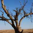 Dead tree — Stock Photo #1095682
