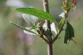 Invasion of caterpillars — Stock Photo