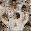 Stock Photo: Bark of old tree
