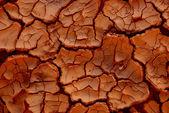 Cracked earth in dry desert — Stock Photo