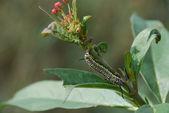 Invasão de lagartas — Fotografia Stock