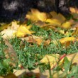 Royalty-Free Stock Photo: Carpet of autumn leaves