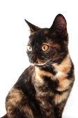 Kitty — Stock Photo
