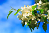 Spring florets — Stock Photo