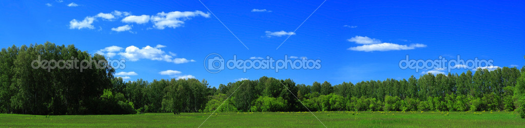 Panorama of a field before a wood and the blue sky — Foto Stock #1035661